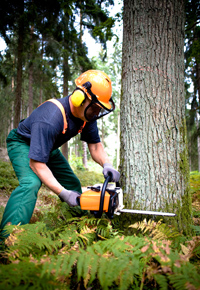 logger working in forest