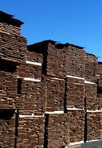 sapele lumber air drying