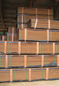 Stacks of Ipe in Lumberyard
