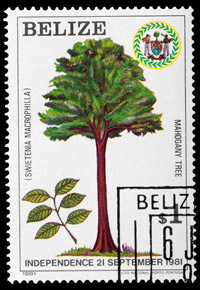 mahogany tree postage stamp belize