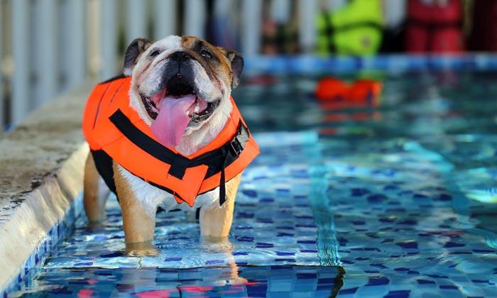 dog wearing life preserver