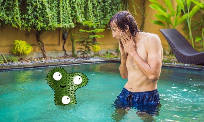 swimming pool green algae problem